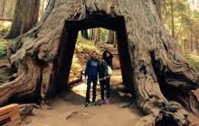 Total Yosemite Experience & Giant Sequoias Tour