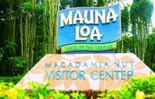 Cruise Excursion - Akaka Falls, Mac Nut & Tropical Gardens (Hilo)