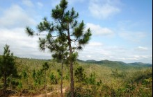 Mountain Pine Ridge Forest Reserve