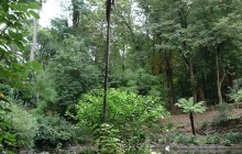 Bucaco Forest