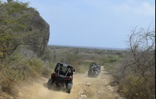 Western Island Buggy Safari