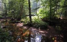 Biogradska Gora