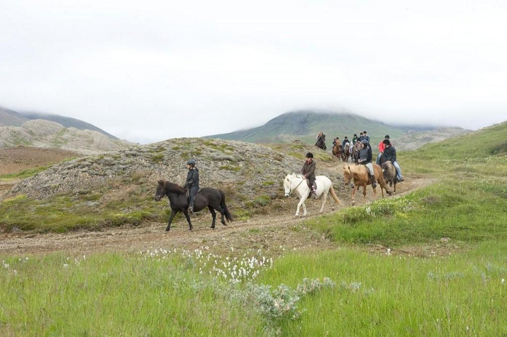 Viking Horses And Golden Circle Trip