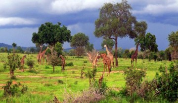 A picture of 2 Days 1 Night Tour Mikumi National Park from Dar Es Salaam