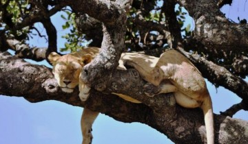 A picture of 7 Days Tanzania Classical Safari