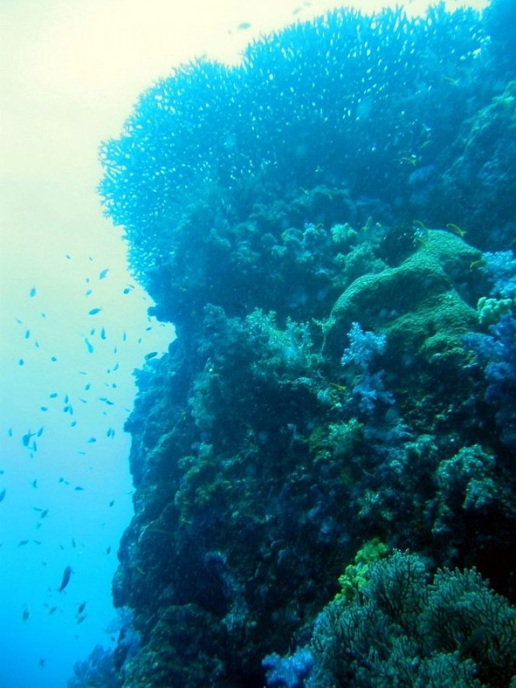 Coral Island (Phuket)