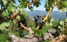 Sonoma Wine & Redwoods Small Group Tour