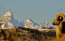 Full Day Tour in Grand Teton National Park and Jackson Hole