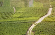 Private Reims Region with Moet Champagne Tasting (5-8pax)