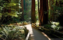 Muir Woods & Sausalito Half-Day Tour