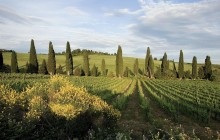 Chianti Half Day Afternoon Tour from Pisa