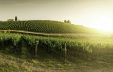 Chianti at Sunset With Dinner From Siena