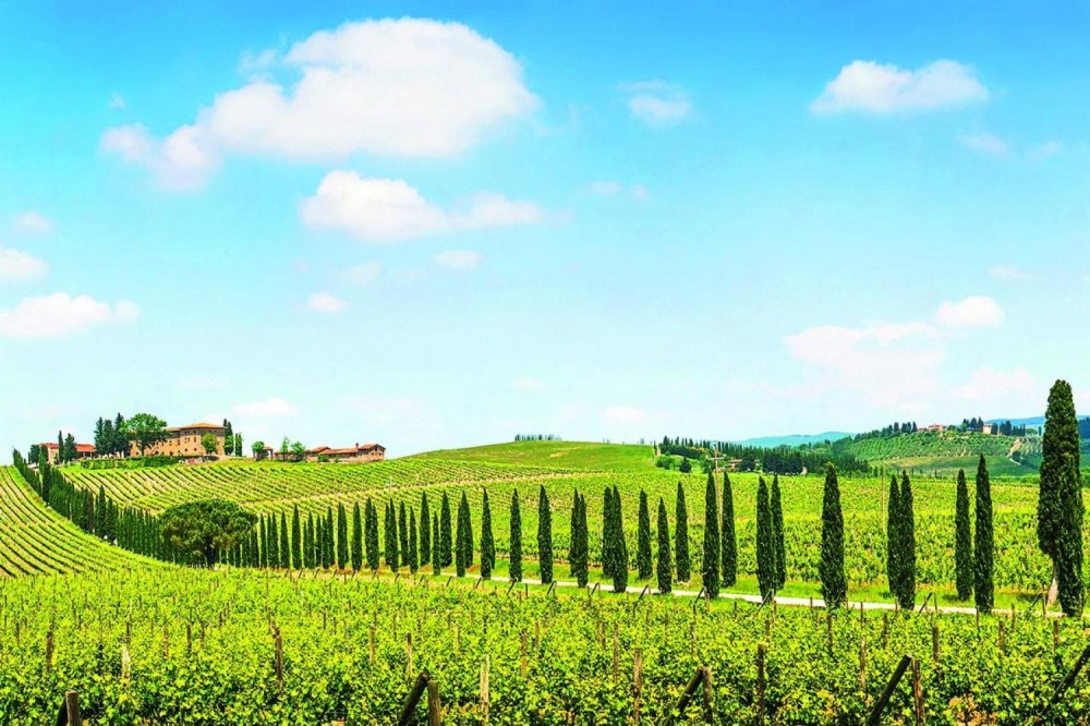 Chianti Bike Tour from San Gimignano