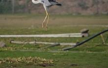 Bird Sanctuary (Bhigwan)
