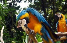Macaw Mountain Bird Park & Nature Reserve