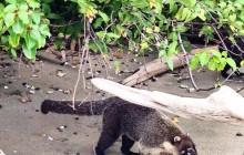 ScubaCaribe Guanacaste