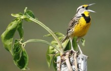 Birding Package 3 Northern and Central Belize (7 days, 6 nights)