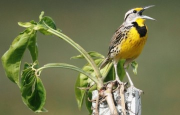 A picture of Birding Package 3 Northern and Central Belize (7 days, 6 nights)