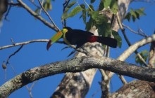 Birding Package 1 Central Belize (6 days, 5 nights)