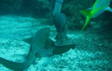 Snorkel Hol Chan & Shark Ray Alley