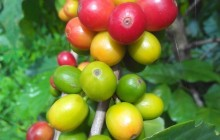 Visit a 100% Organic Coffee Farm