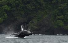 Whale Watching & Iguana Island