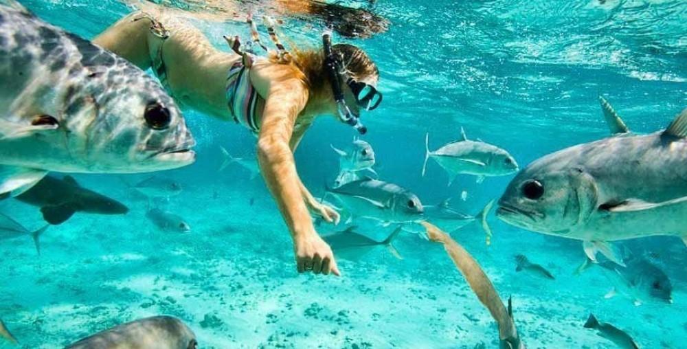 Snorkel Tour: Full Day