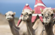 9 Day Morocco + The Great Desert Trip