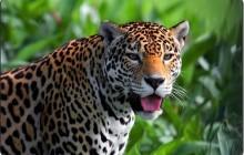 Altun Ha & Belize Zoo