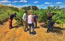 VIP Penedes & Montserrat: Wine, Cava & Oil Experience With Local