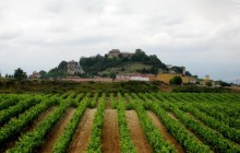 Vitoria and La Rioja Wine Area Full Day Tour