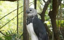 Belize Zoo & Zip Lining