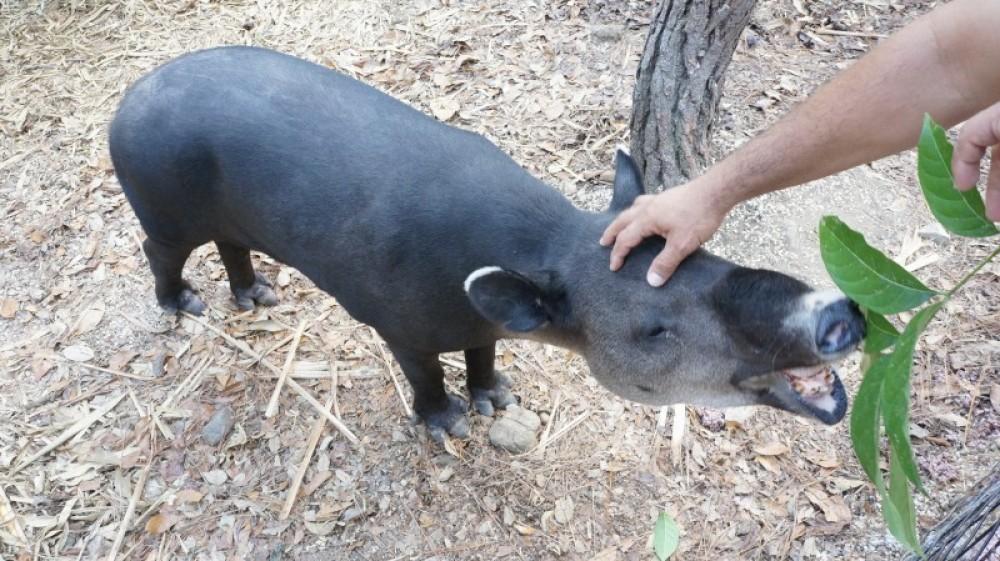 Altun Ha Mayan Ruin & Belize Zoo