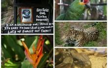 Altun Ha Mayan Ruins & Belize Zoo