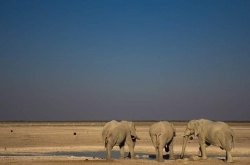 A picture of 3 Day Etosha Express