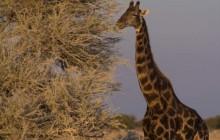Chameleon Safaris