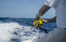 Pelagic: Spin Fishing (Lagoon) Full Day
