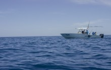 The Pelagic: Spin Fishing (Reef & Cayes) Full Day