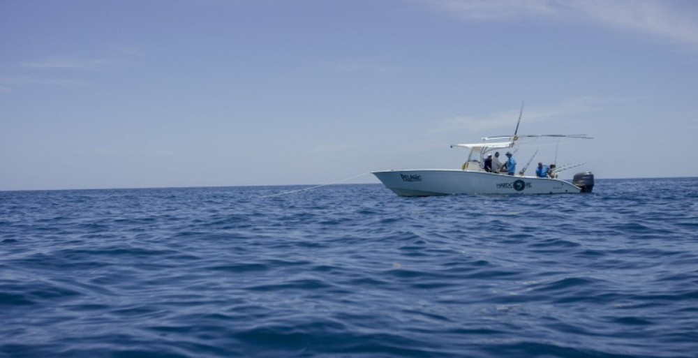 The Pelagic: Outer Reef Full Day
