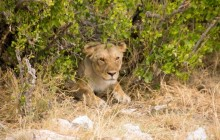 6 Day Dunes & Wildlife Experience Safari