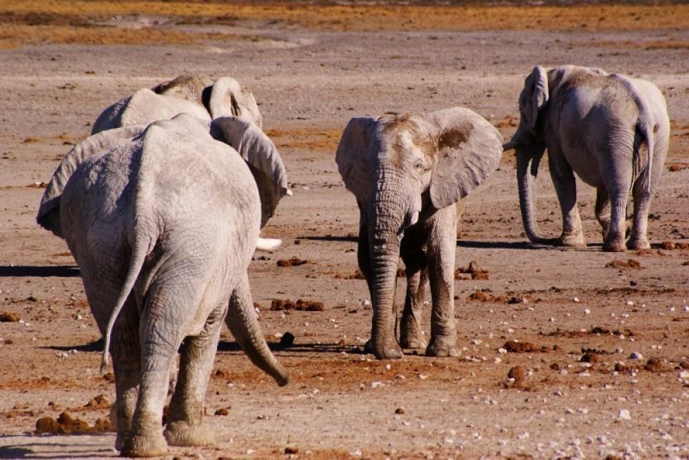 4 Day Etosha & Swakopmund Adventure Safari