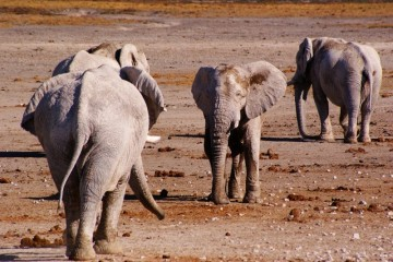A picture of 4 Day Etosha & Swakopmund Adventure Safari