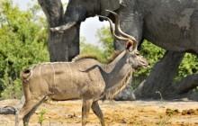 21 night Best of Northern Botswana Safari