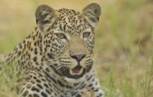 21 night Best of Northern Botswana Safari