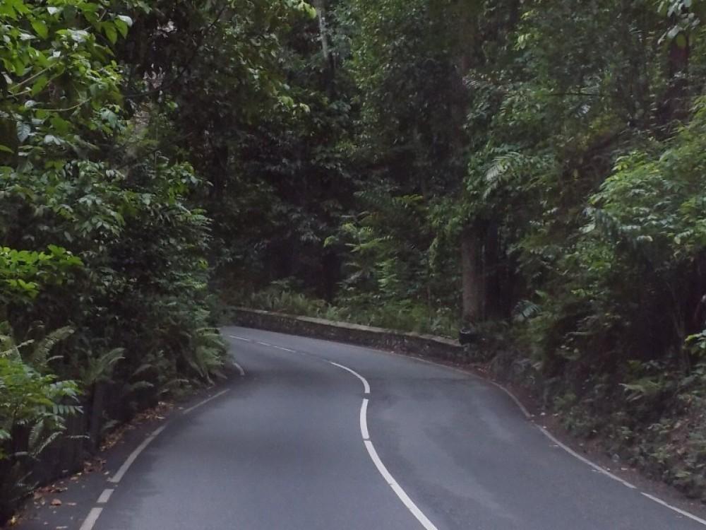 Blue Hole & Fern Gully Rain Forest Adventure from Ocho Rios