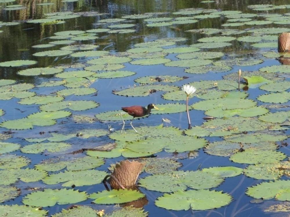 Belize River Tour