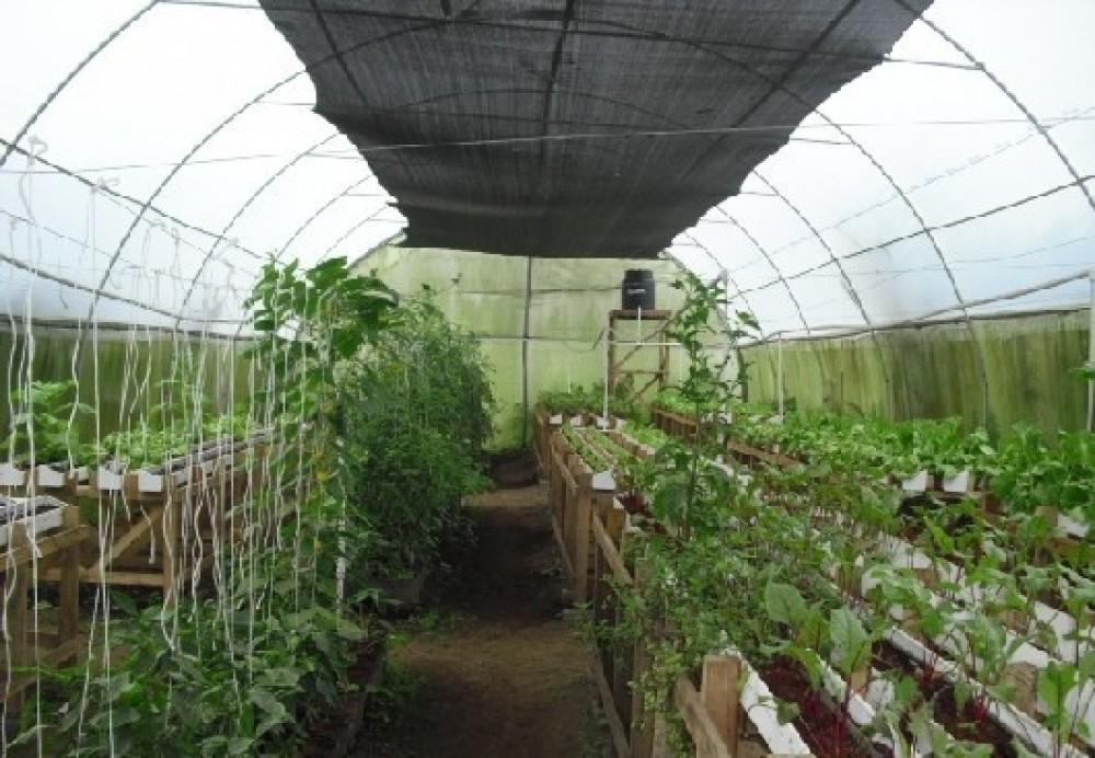 Arenal COMBO Tour: Ecological Park & Organic Farm