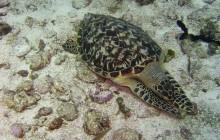Island Divers Belize