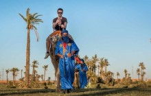 Camel Ride In Oasis Palmeraie Marrakesh