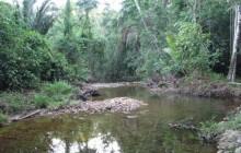 Cockscomb Basin Jaguar Reserve